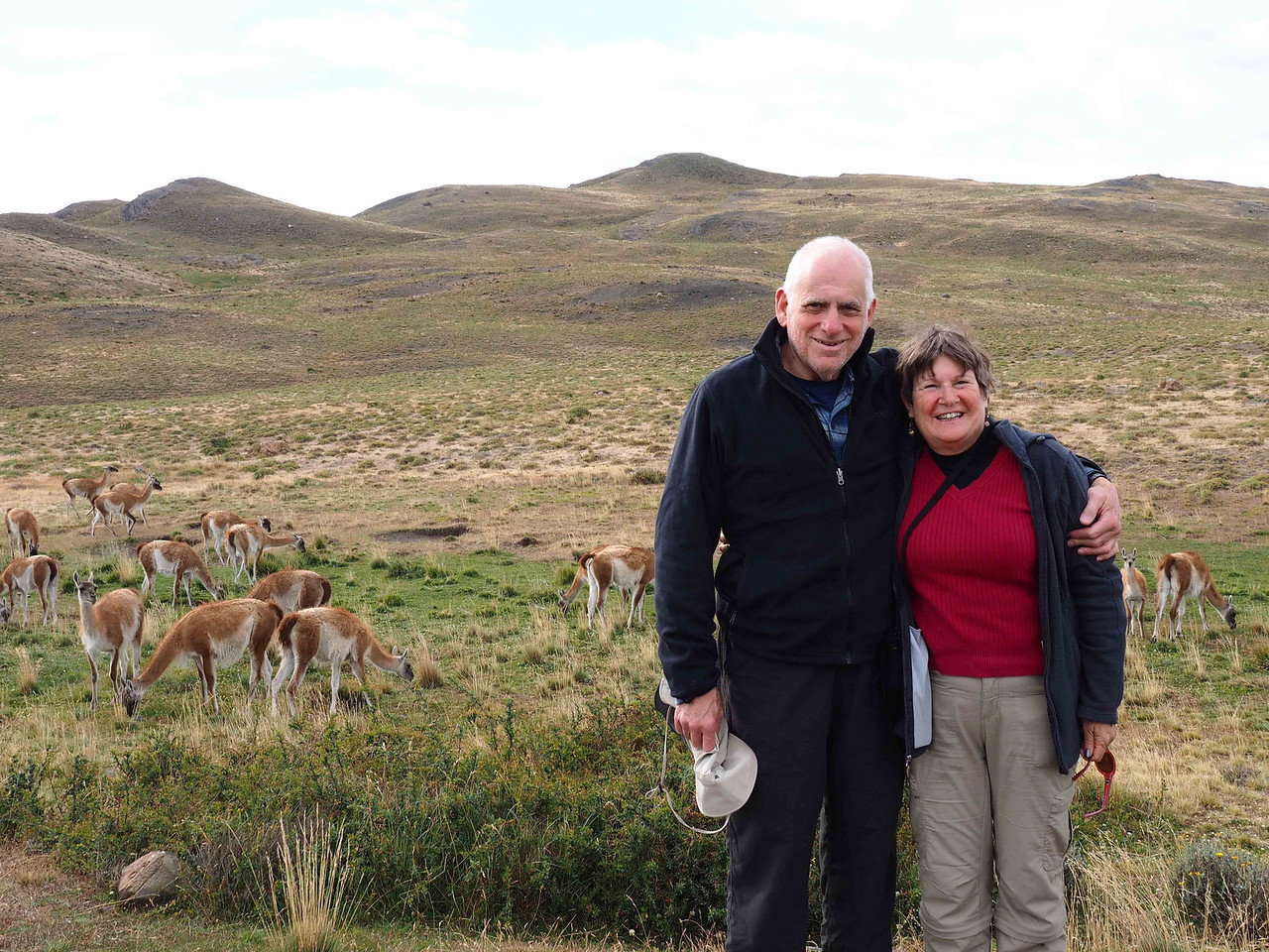 Posing with the Guanacos, Torres del Paine NP