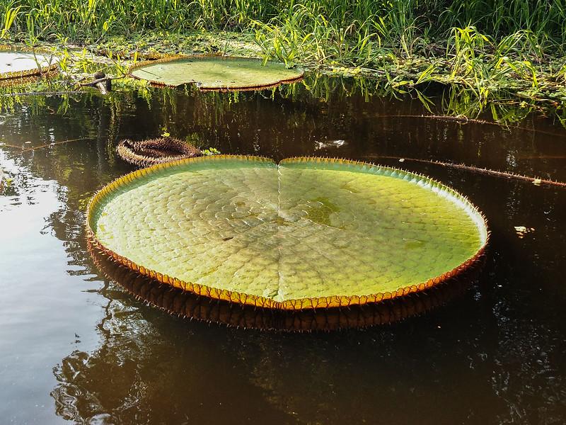 Water Platters