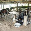 Horse powered sugar cane press,  Rum Distillery on the Amazon