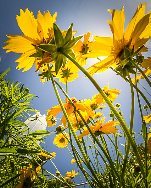 Reaching for the Sun-2-2