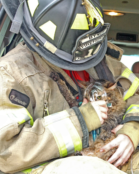 Maine Coon Cat receiving oxygen after being rescued