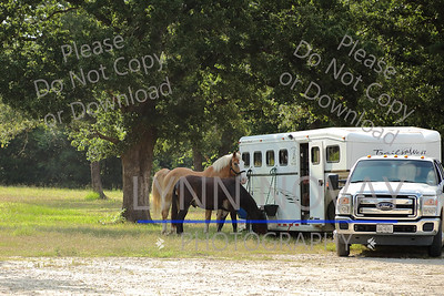 TDHMA ~ Texas Draft Horse and Mule Association