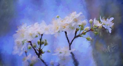 Spring Blossom P1011440