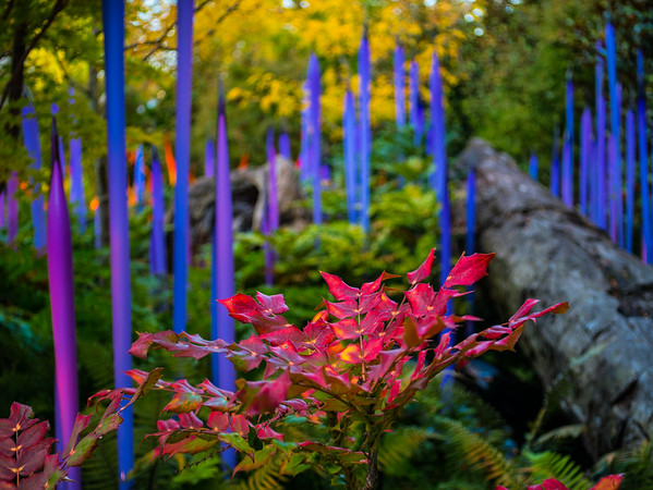 Chihuly 1080077