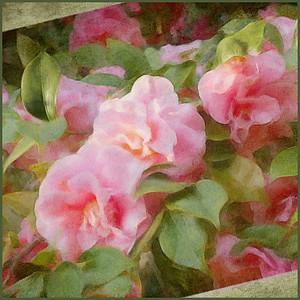 Allen_G9_Floral_Camellia SQ tilt