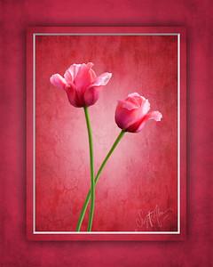 Tulip Buddies 2 8x10