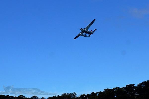 Beaver Seaplane Flying Over Pittwater
