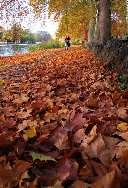 Canbury Gardens - Autumn Foliage