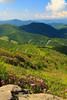 NC TN ROAN MOUNTAIN APP TRAIL GRASSY RIDGE JUNEAB_MG_5994MMW