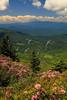 NC TN ROAN MOUNTAIN APP TRAIL GRASSY RIDGE JUNEAB_MG_6172MMW