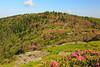 NC TN ROAN MOUNTAIN APP TRAIL GRASSY RIDGE JUNEAB_MG_5841MMW