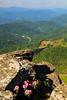 NC TN ROAN MOUNTAIN APP TRAIL GRASSY RIDGE JUNEAB_MG_5883MMW