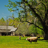 TN DOVER LAND BETWEEN THE LAKES NRA HOMEPLACE DOUBLE PEN HOUSE APRAF_4150237bMMW
