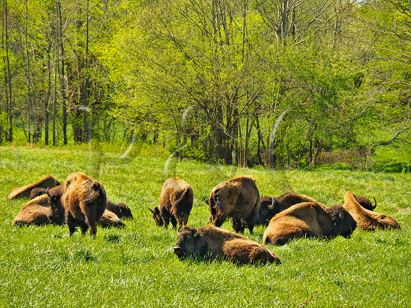 TN DOVER LAND BETWEEN THE LAKES NRA SOUTH BISON RANGE APRAF_4150701MMW