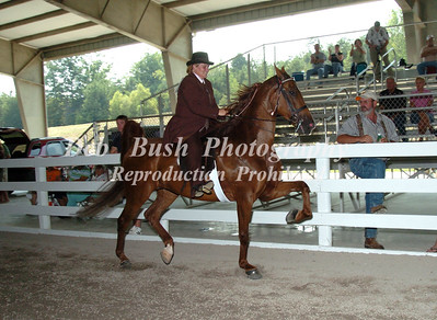 CLASS 9- SADDLEBRED OPEN