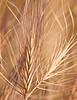 Grass1643