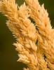 Grass1610