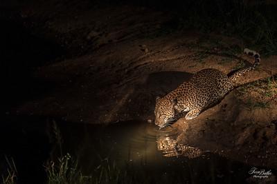 Leopards_5141
