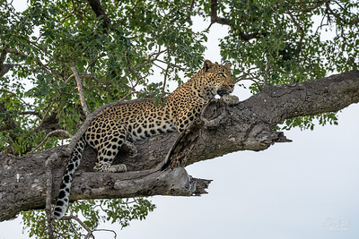 Thornybush22pm_1900