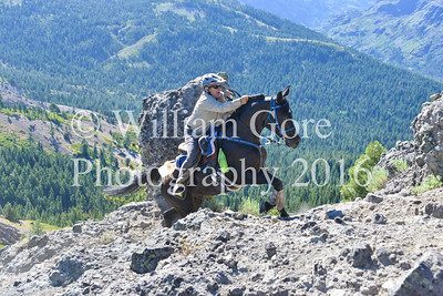 Cougar Rock ~ Tevis 2016 ~ Bill Gore