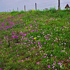 Wildflowers March 2nd, 2012 Goliad County