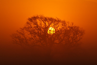 Orange sunrise through a tree