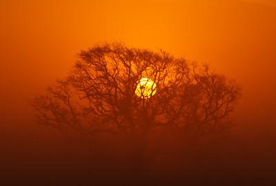 Orange sunrise through a tree