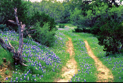The Road Less Traveled Willow Loop in Blanco County, TX