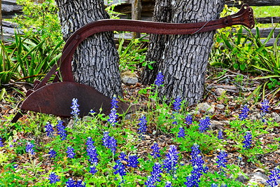 Willow_City_Loop_Old_Plow_Bluebonnets_D75_4998