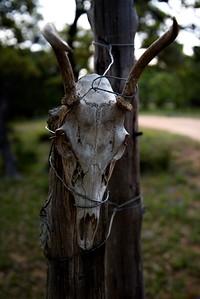 Willow_City_deer_skull_D75_5002