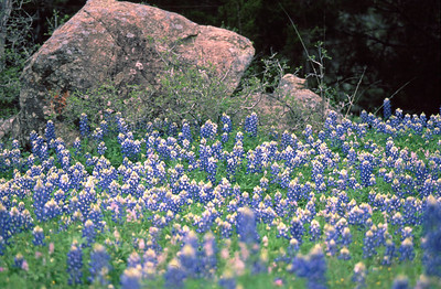 """The title of this caption is """"Rock and Blue"""".  The photo was taken in Blanco County, TX."""