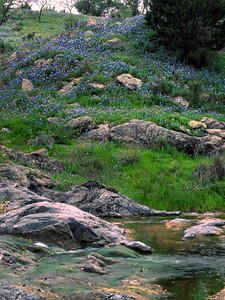 Comanche Creek runs through Blanco County with its sides dotted with bluebonnets and other wildflowers.