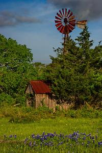 Wildflower_Trip_2014_Old_Windmill_Barn_Bluebonnets_RAW9310