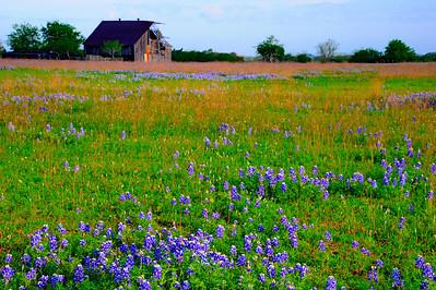 Wildflower_Trip_2014_Old_Barn_Bluebonnets_RAW9256