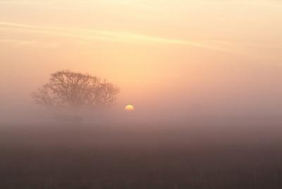 Foggy sunrise along FM457 south of Bay City going to San Bernard NWR