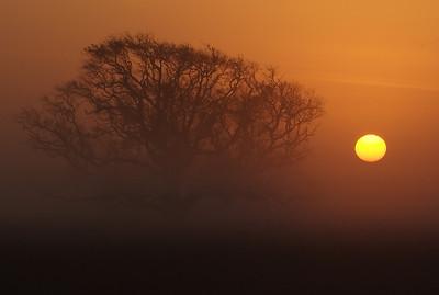 Foggy tree along FM457 south of Bay City, TX