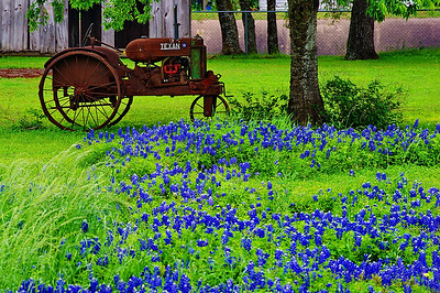 Bluebonnets&Old-tractor