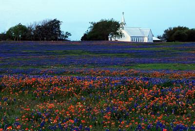 Washington County Wildflowers