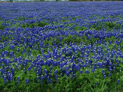 North of Chappel Hill, TX