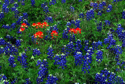Paintbrushes and Bluebonnets