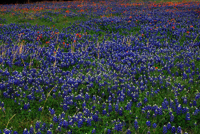 This field of wildflowers can be found in Washington-on-the-Brazos State Park on the nature trail by the pond.