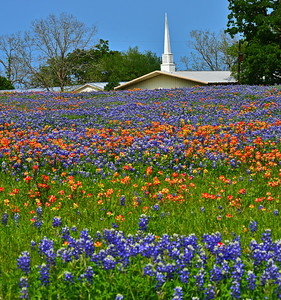 04022017_Whitehall-TX_Union_Hill_Baptist_Church_Bluebonnets_750_1529
