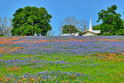 04032017_Whitehall_Union_Grove_Bap_Church_Field-Bluebonnets_750_1518
