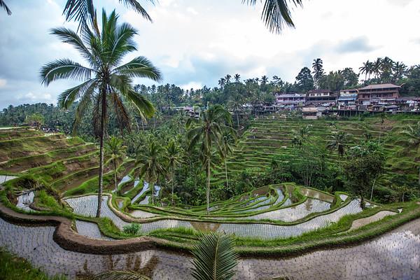 Rice Fields | Tegalalang Ubud Bali