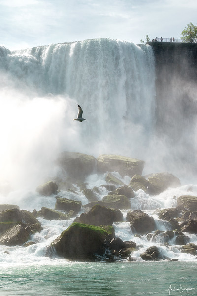 Niagara's Flying Seagull
