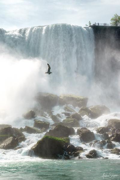 Niagara's Flying Seagull