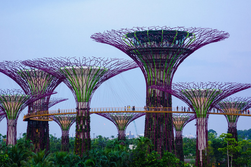 Gardens by The Bay Up Top - Singapore