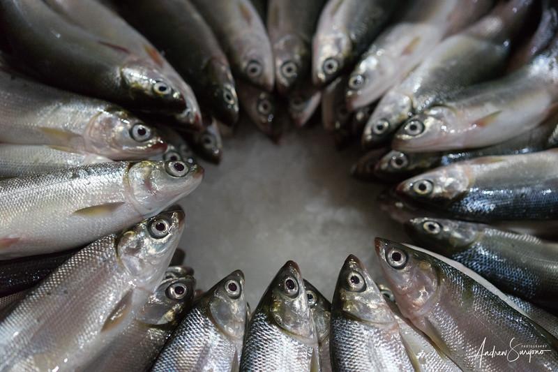 Fish Eye Formation