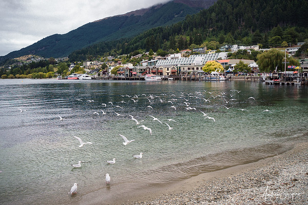 Flying Seagulls at Wakatipu Lake