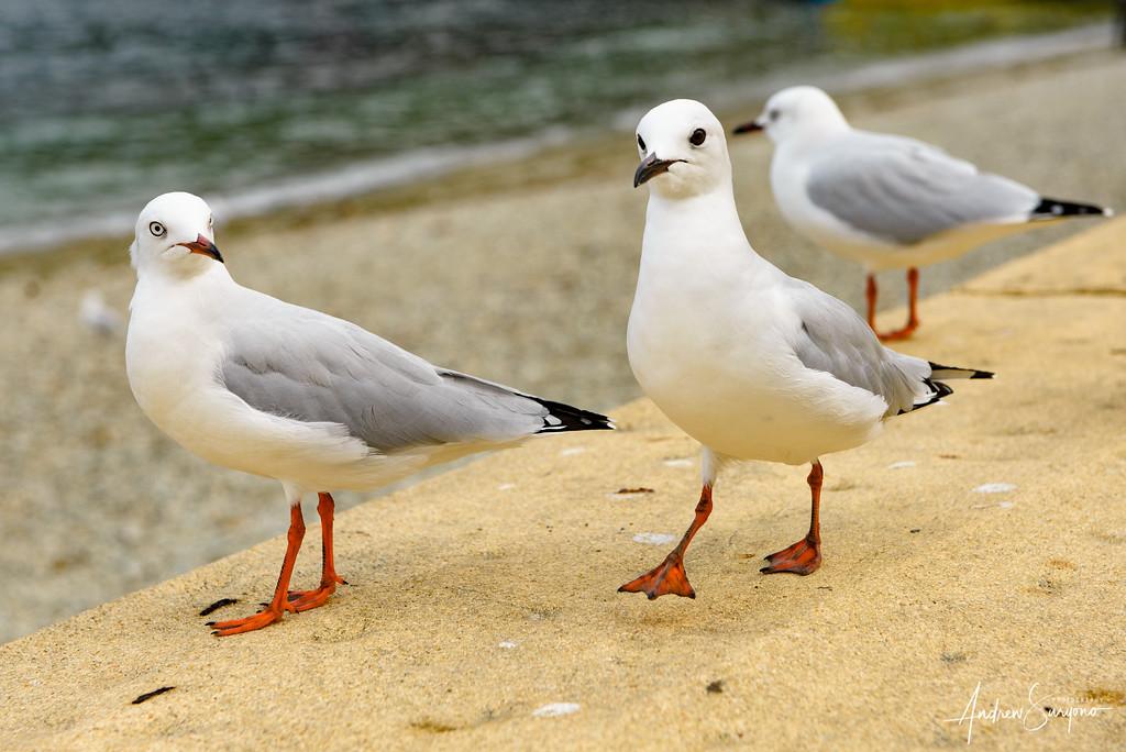 QTOWN16 - Seagull Catwalk